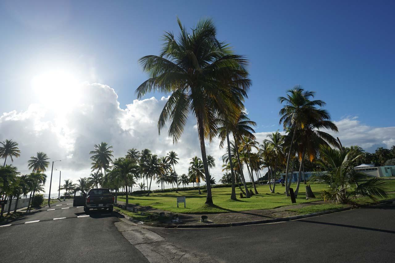Beautiful palm trees near the entrance of La Zona Puerto Rico Skydiving
