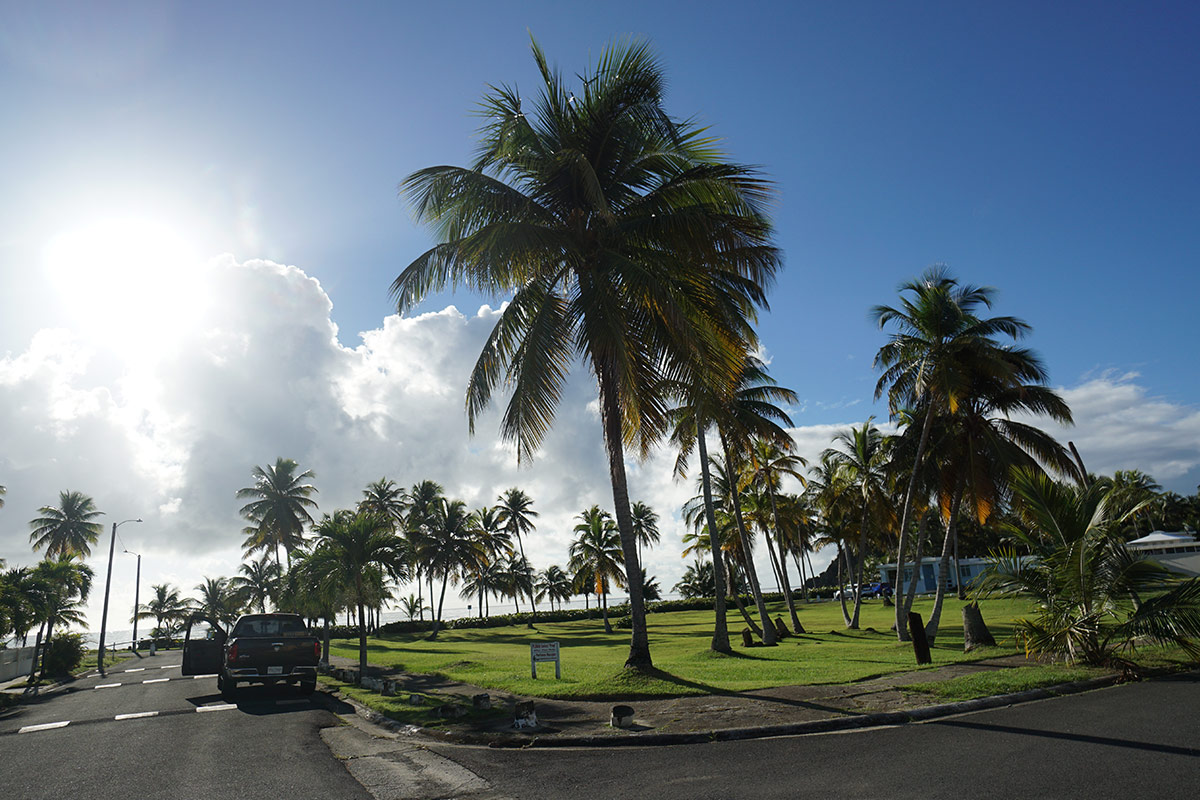 Beautiful palm trees near the entrance of La Zona Puerto Rico Skydiving